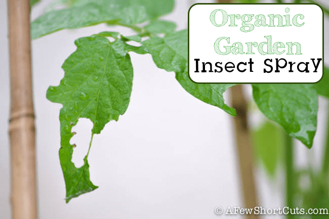 Organic Garden Insect Spray