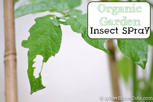 Organic Garden Insect Spray