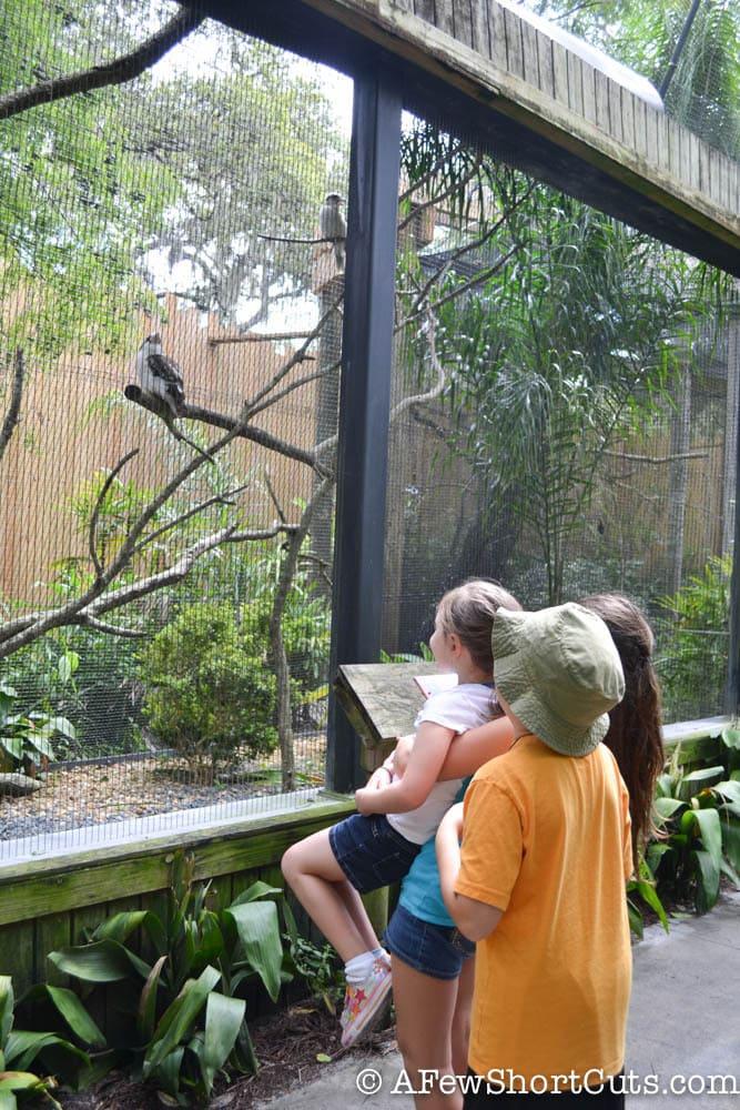 Lowry Park Zoo Tampa FL-1