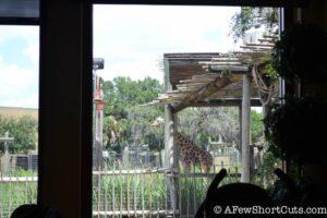 Lowry Park Zoo Tampa FL-10