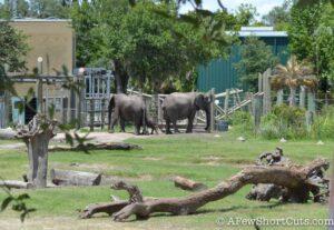 Lowry Park Zoo Tampa FL-13