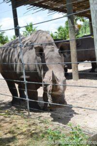 Lowry Park Zoo Tampa FL-14