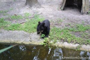 Lowry Park Zoo Tampa FL-17