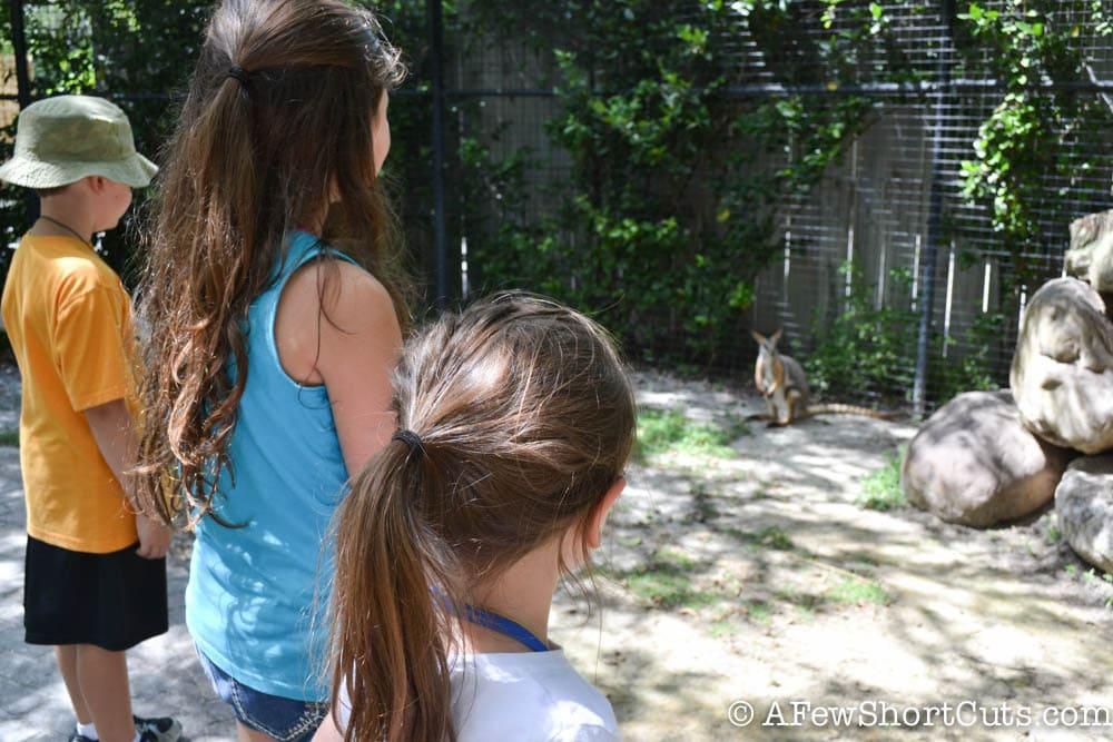 Lowry Park Zoo Tampa FL-5