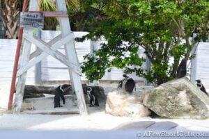 Lowry Park Zoo Tampa FL-8