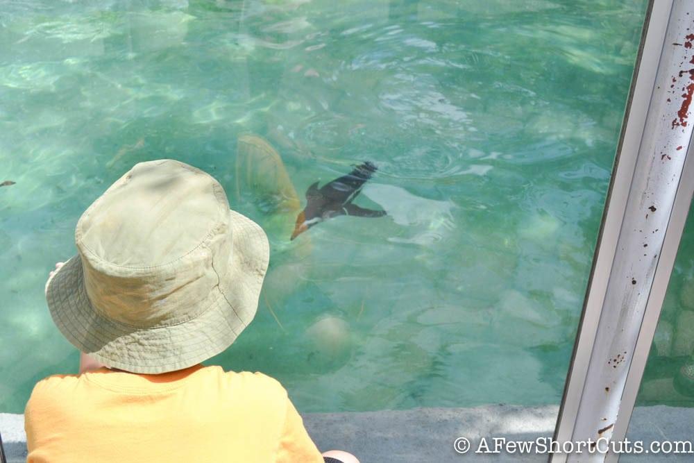 Lowry Park Zoo Tampa FL-9