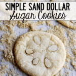 Simple-Sand-Dollar-Sugar-Cookies