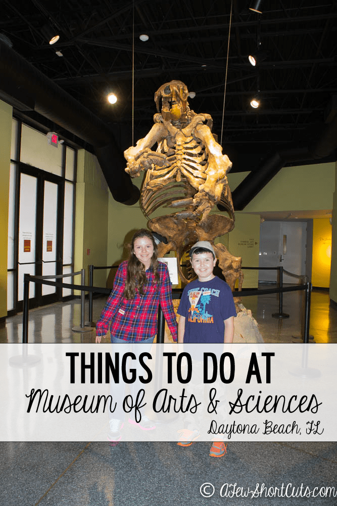 Things to Do at the Museum of Arts & Sciences Daytona Beach Fl