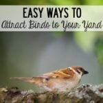 Easy-ways-to-attract-birds-to-your-yard