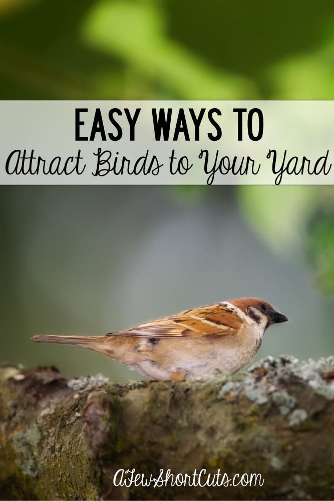 Easy Ways to Attract Birds to Your Yard - A Few Shortcuts
