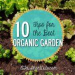 10-Tips-for-the-best-organic-garden