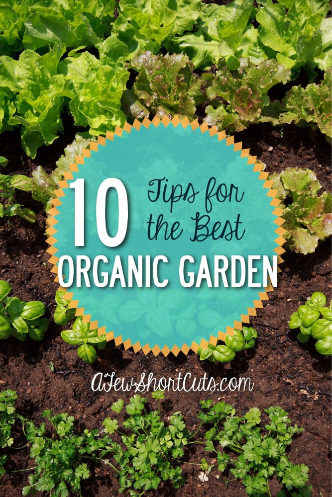 Are you gardening this year? Why not make it organic? Here are 10 Tips for the Best Organic Garden.