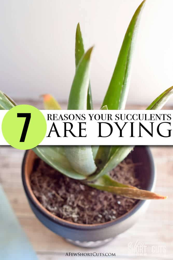 7 Reasons Your Succulents Are Dying A Few Shortcuts