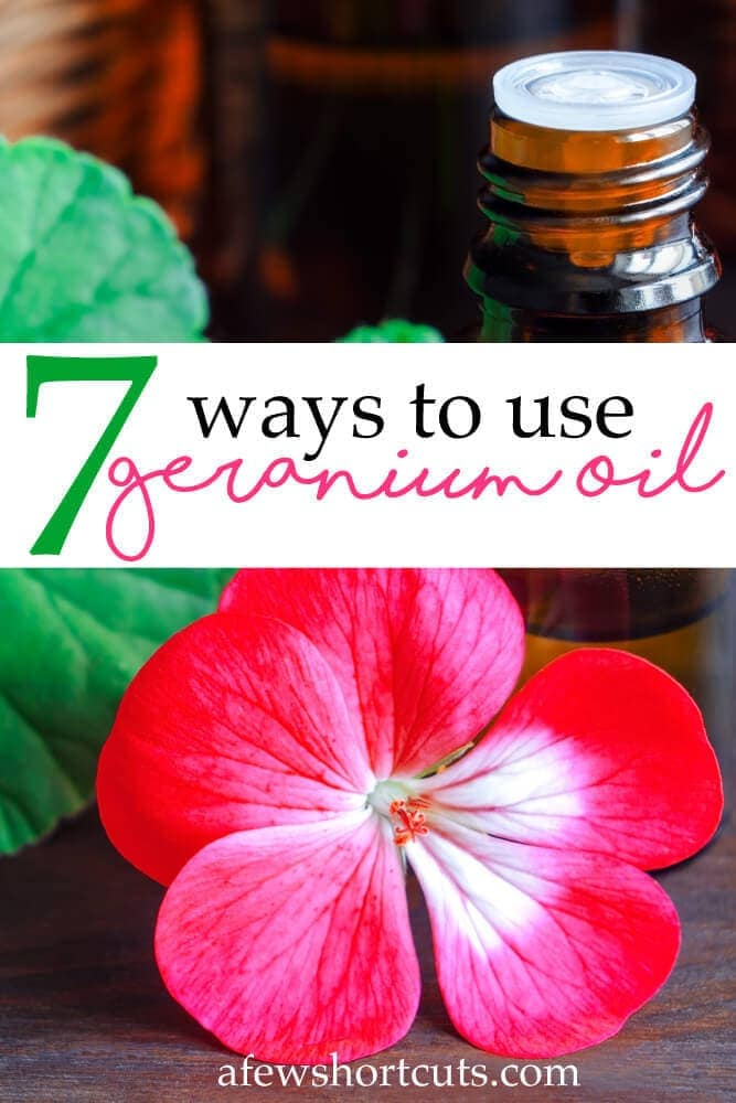 Are you ready to give geranium essential oil a try? Then give these 7 ways to use geranium essential oil your consideration and see how it can benefit you. A great essential oil to have in your arsenal.