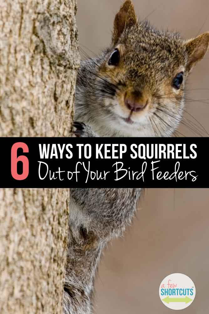 Try these tips for keeping squirrels out of your bird feeders, so your birds can dine in peace and you aren't replacing seeds or feeders week after week! Give these tips a try and see how they work for you!