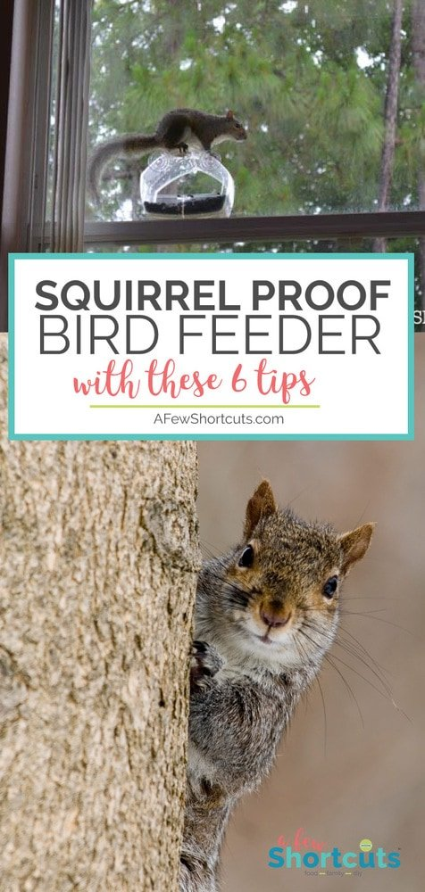 at feed without birds proof how squirrel to out feeder way best keep of feeders bird look squirrels