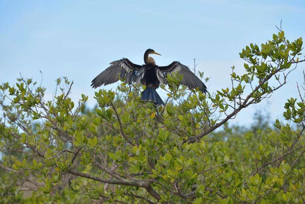 cormorant_dsc_5767