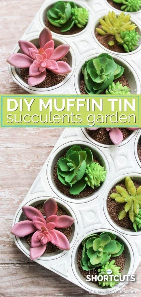 Looking for a simple indoor garden idea for your succulents? Look how simple this DIY Muffin Tin Succulents Garden is to make!