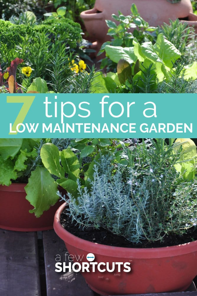 With a little bit of planning and these 7 tips for a low maintenance garden, you will be surprised how much you can grow with very little effort!