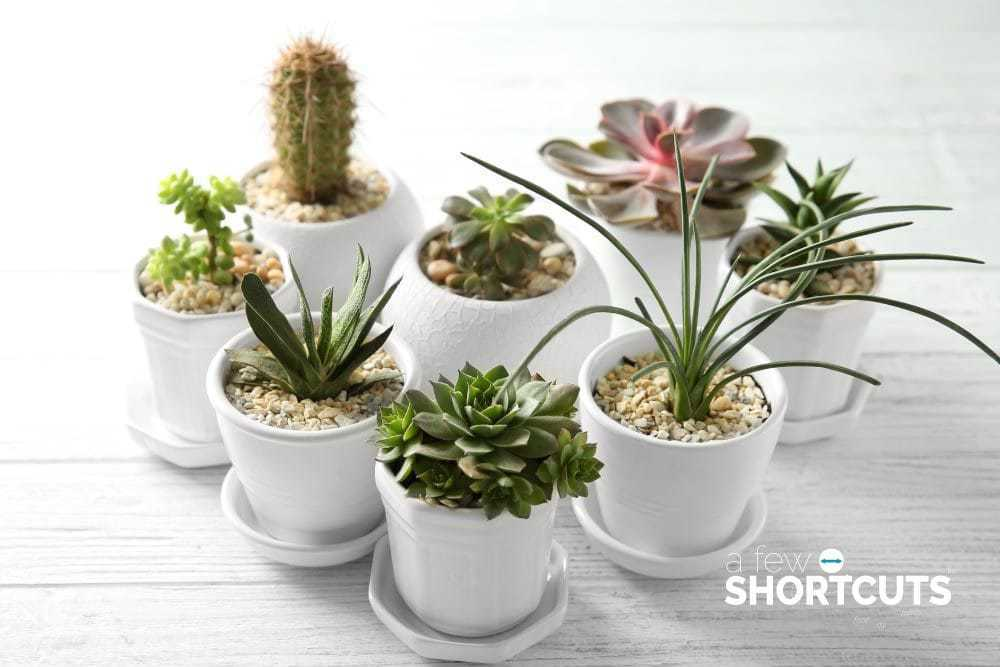 the best place to buy succulents a few shortcuts