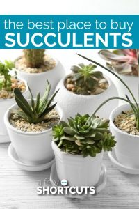 http://afewshortcuts.com/2017/03/the-best-place-to-buy-succulents/