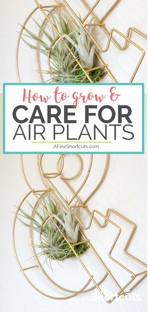 Get in on the trend and add some green to your home. Consider these tips for how to grow and care for air plants, and see what great houseplants these can be!
