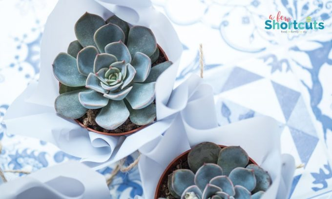 Succulents are a great choice for an indoor garden. Learn the 6 Types of Succulents you should grow at your house and why.