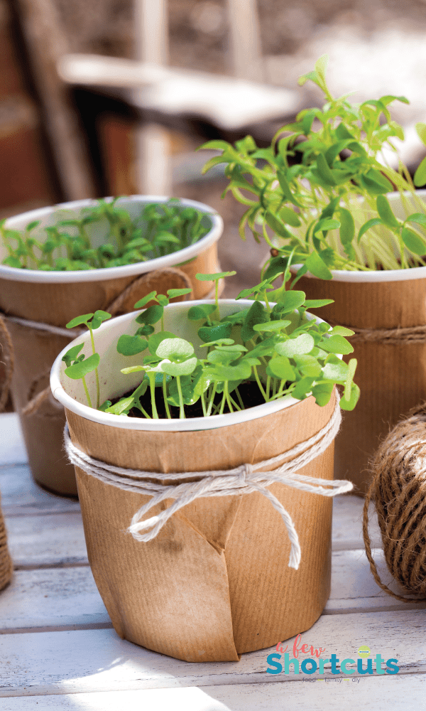 Starting an indoor herb garden is so easy and has so many benefits it is a no-brainer. Learn how to start an indoor herb garden. So simple and rewarding!