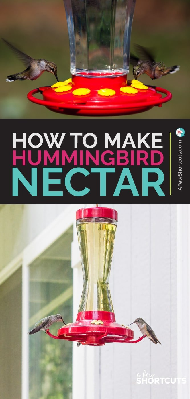 image relating to Printable Hummingbird Nectar Recipe identify How in direction of Generate Hummingbird Nectar - A Couple of Shortcuts