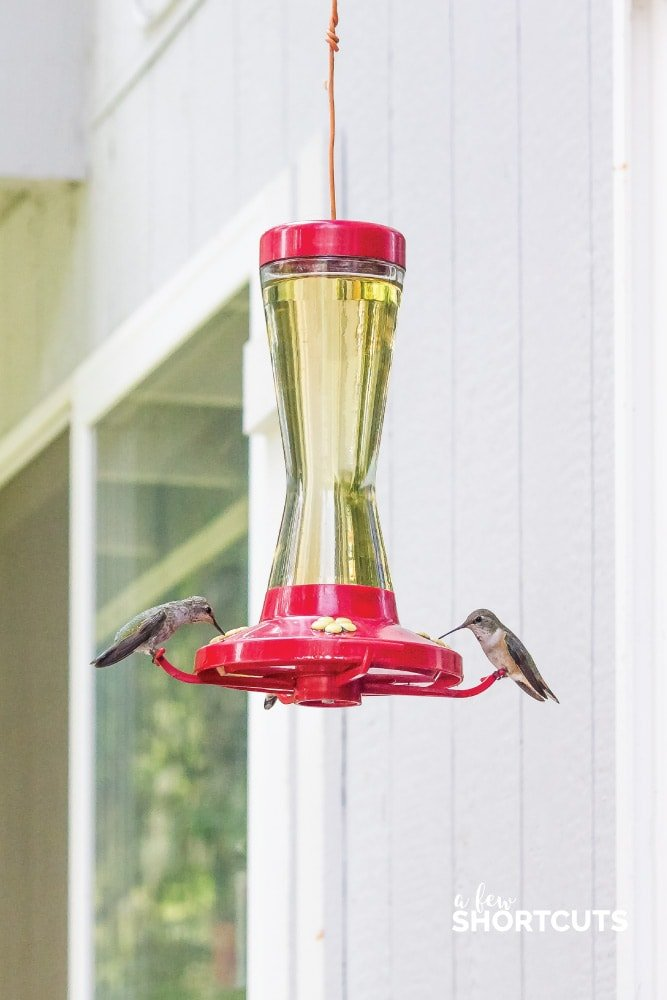 photo relating to Printable Hummingbird Nectar Recipe titled How in the direction of Produce Hummingbird Nectar - A Several Shortcuts